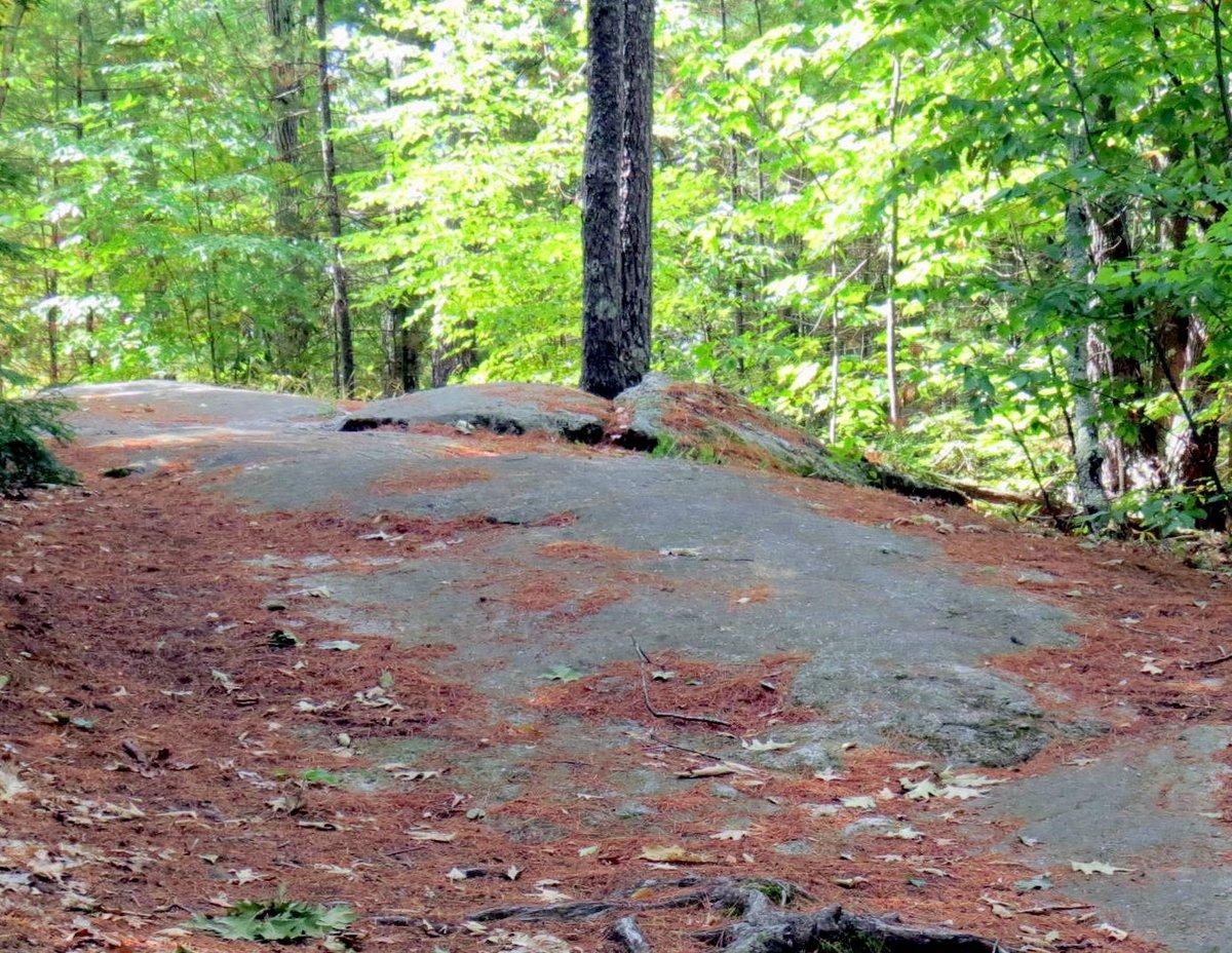 11. Trail Top