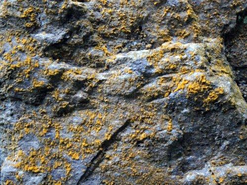 17. Algae