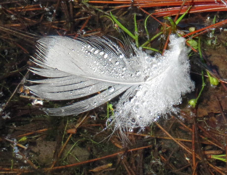 21. Feather