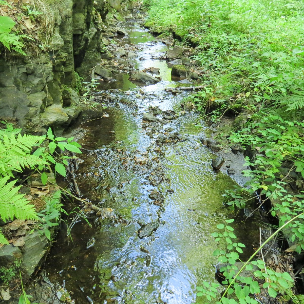8. Drainage Ditch