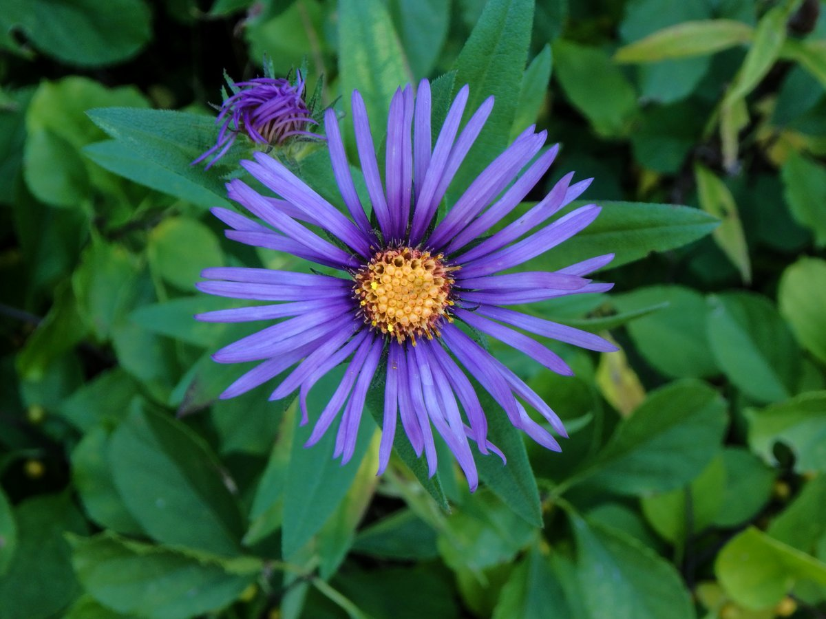 Late September Flowers New Hampshire Garden Solutions