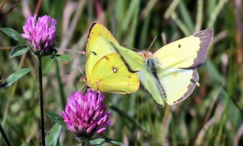 15-butterflies