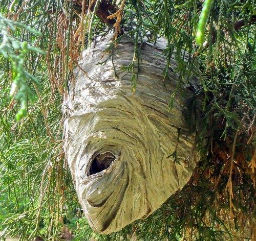 15-wasp-nest