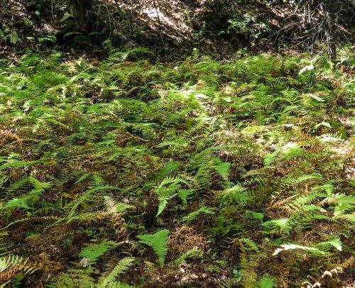 17-fern-gully