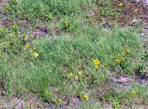 2-ashuelot-island-flowers