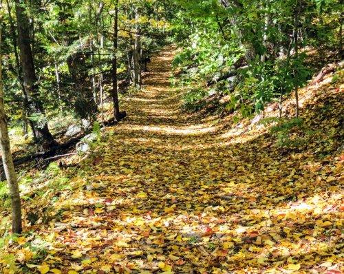 10-trail