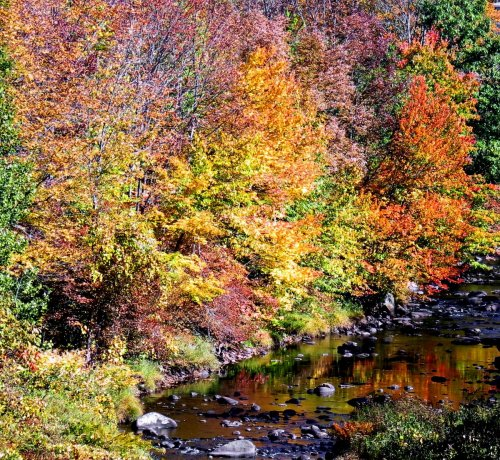 20-branch-river