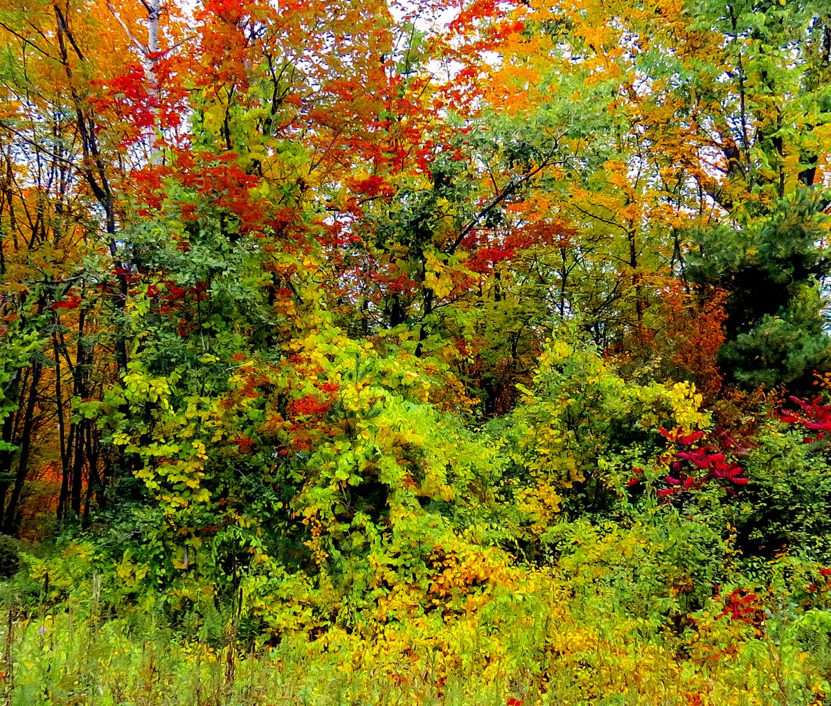More Fall Color | New Hampshire Garden Solutions