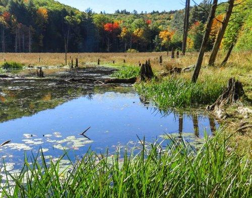 5-beaver-pond