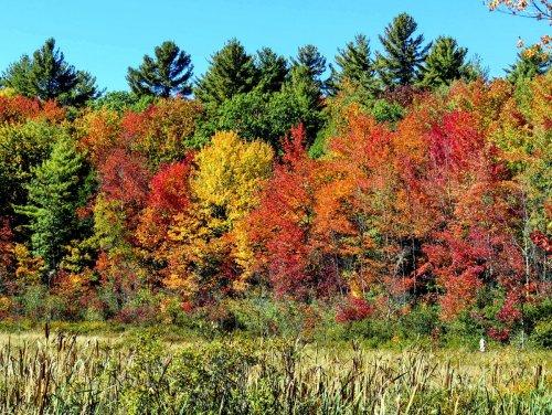 5-fall-foliage