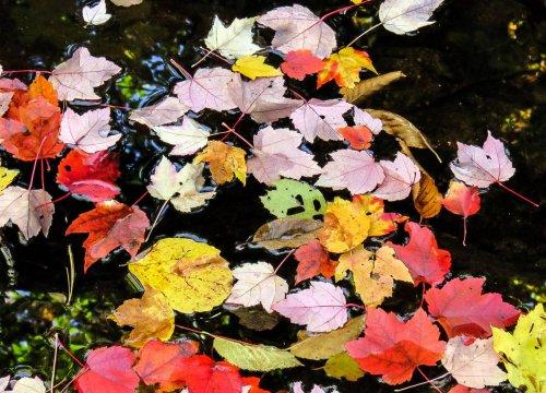 5-fallen-leaves