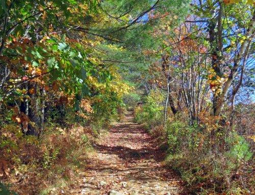 6-trail