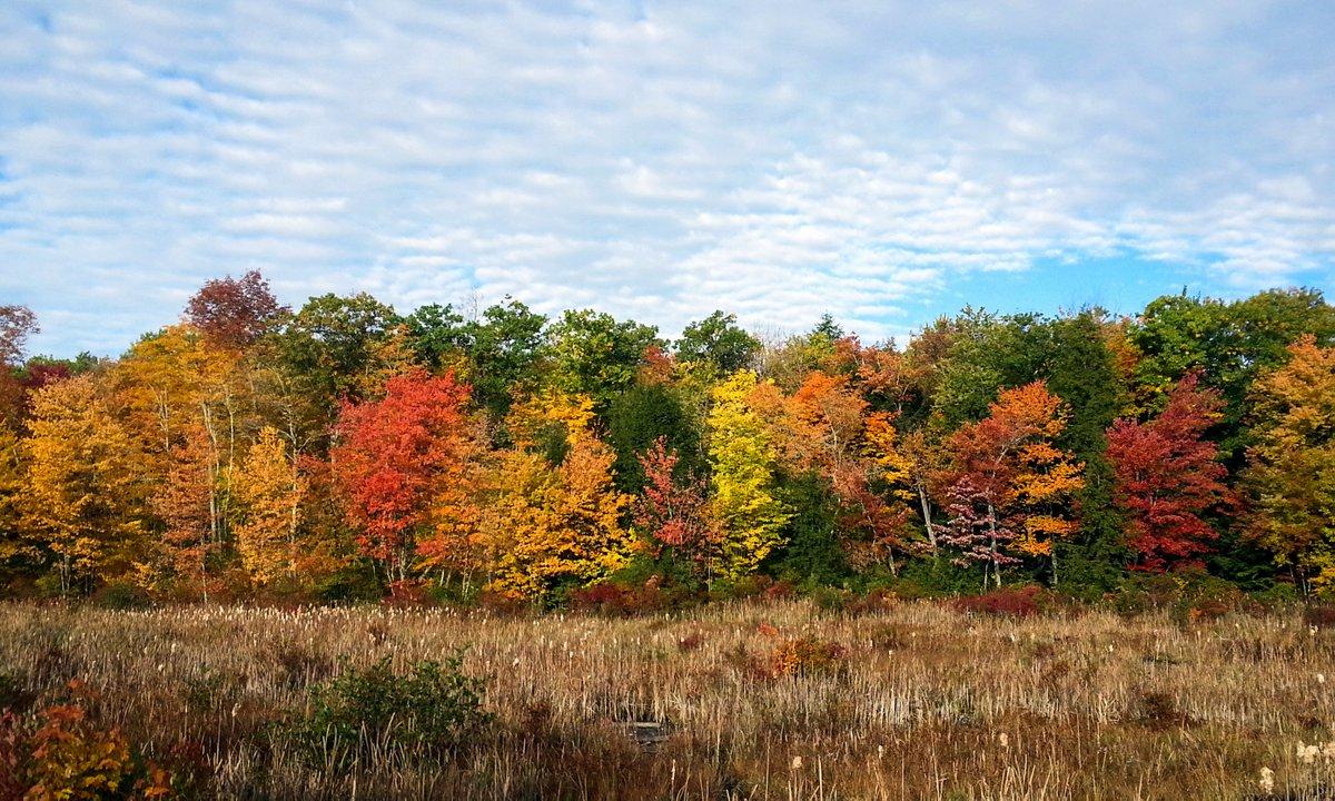 8-fall-foliage