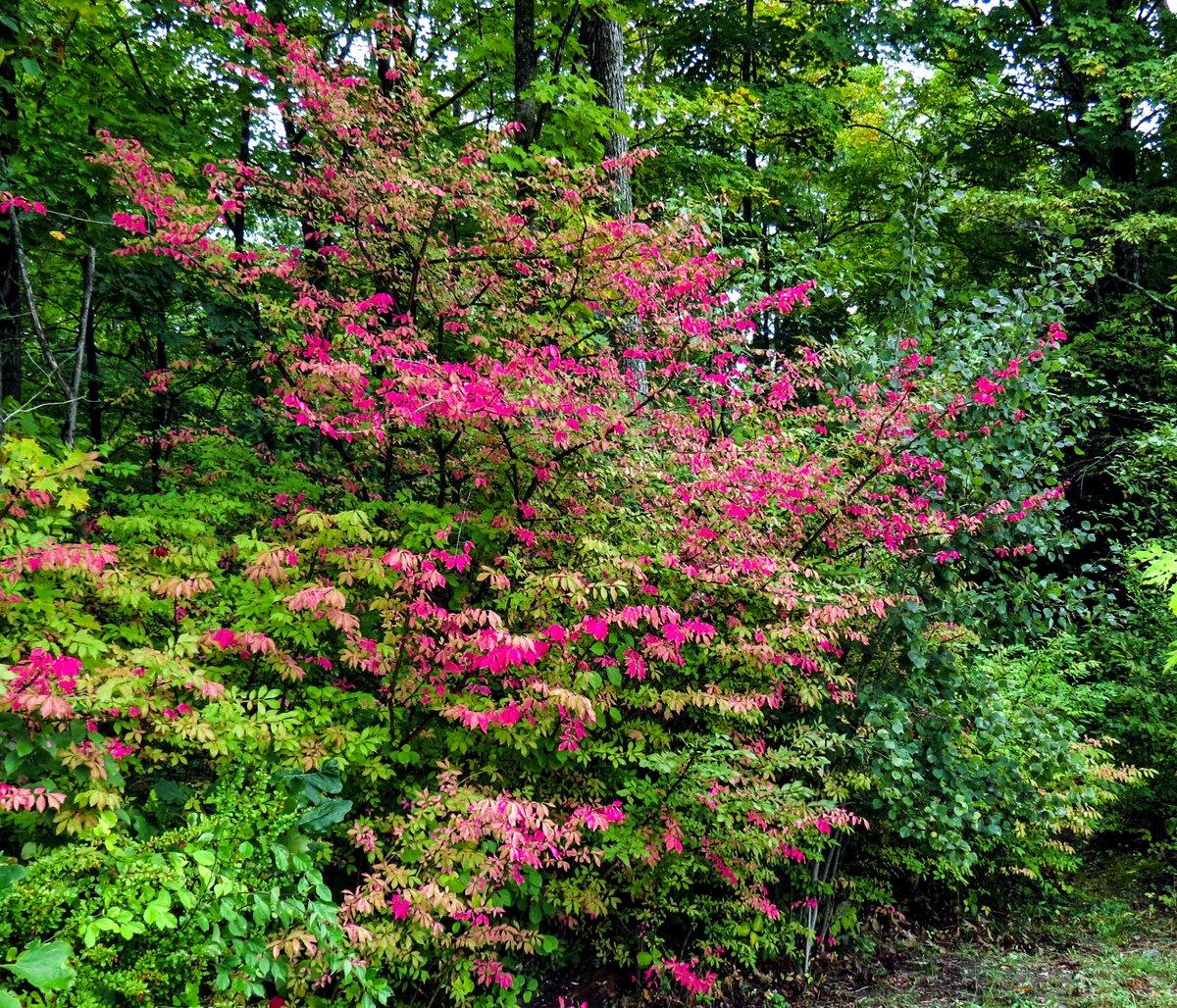 9-burning-bushes