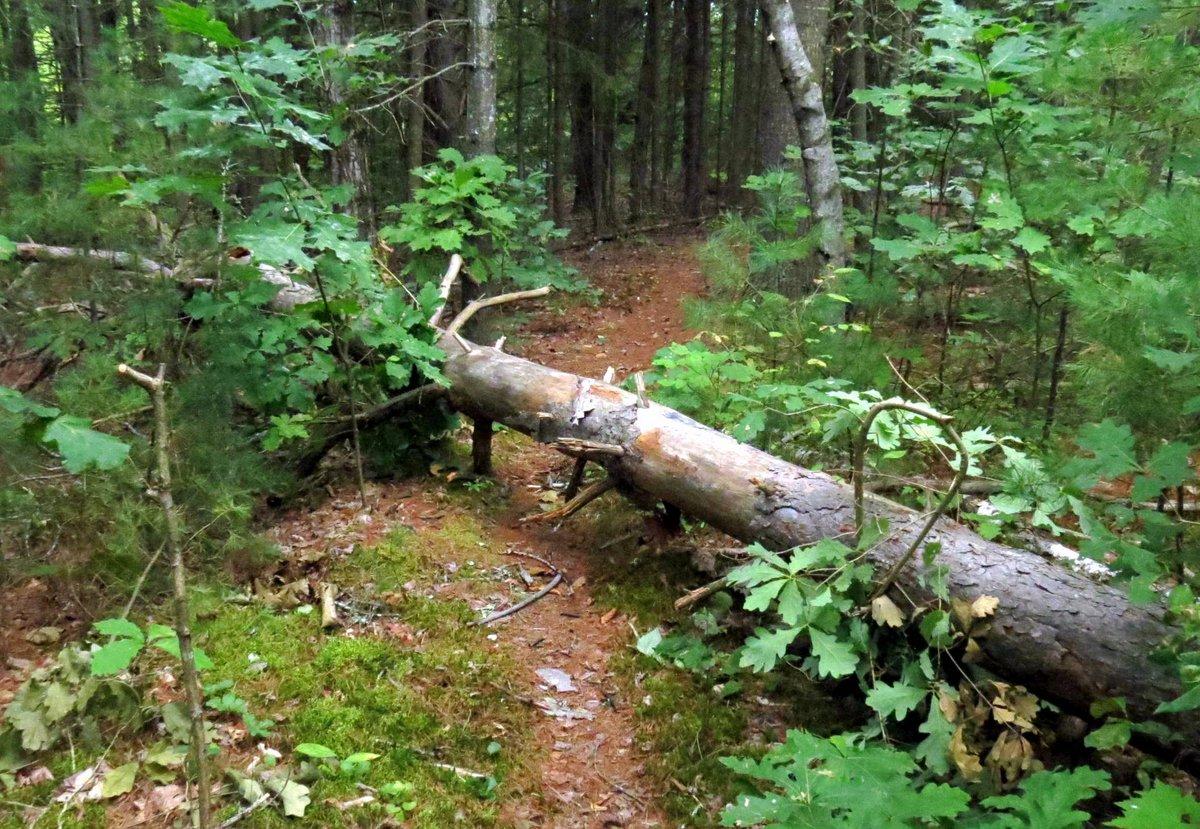 9-fallen-tree