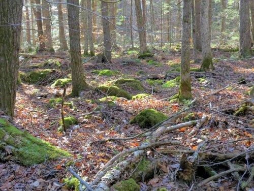 11-woods