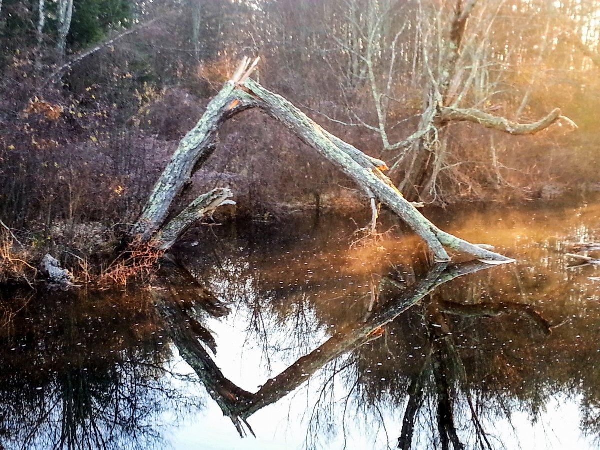 12-tree-down