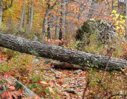 19-fallen-tree