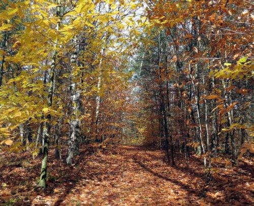 19-trail