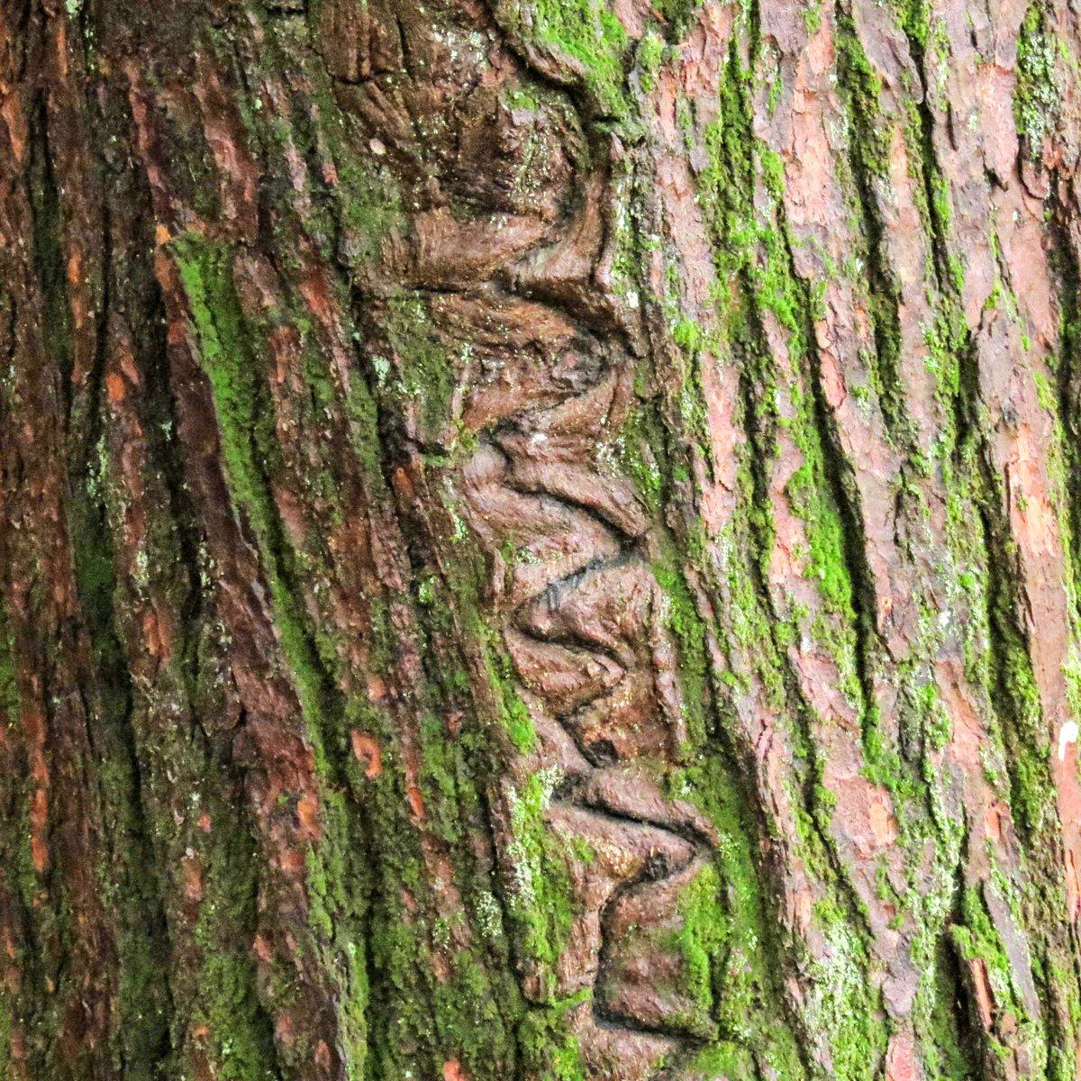 19-zig-zag-scar