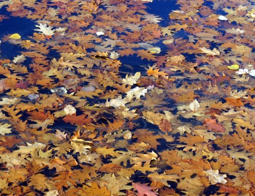 2-leaves-on-water