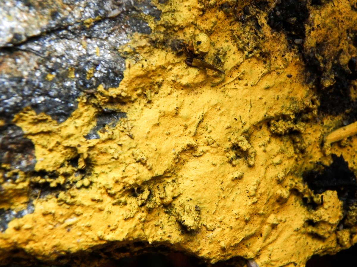21-unknown-yellow-crust-on-stone