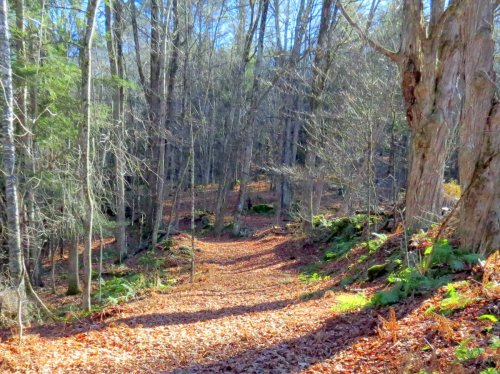 4-trail