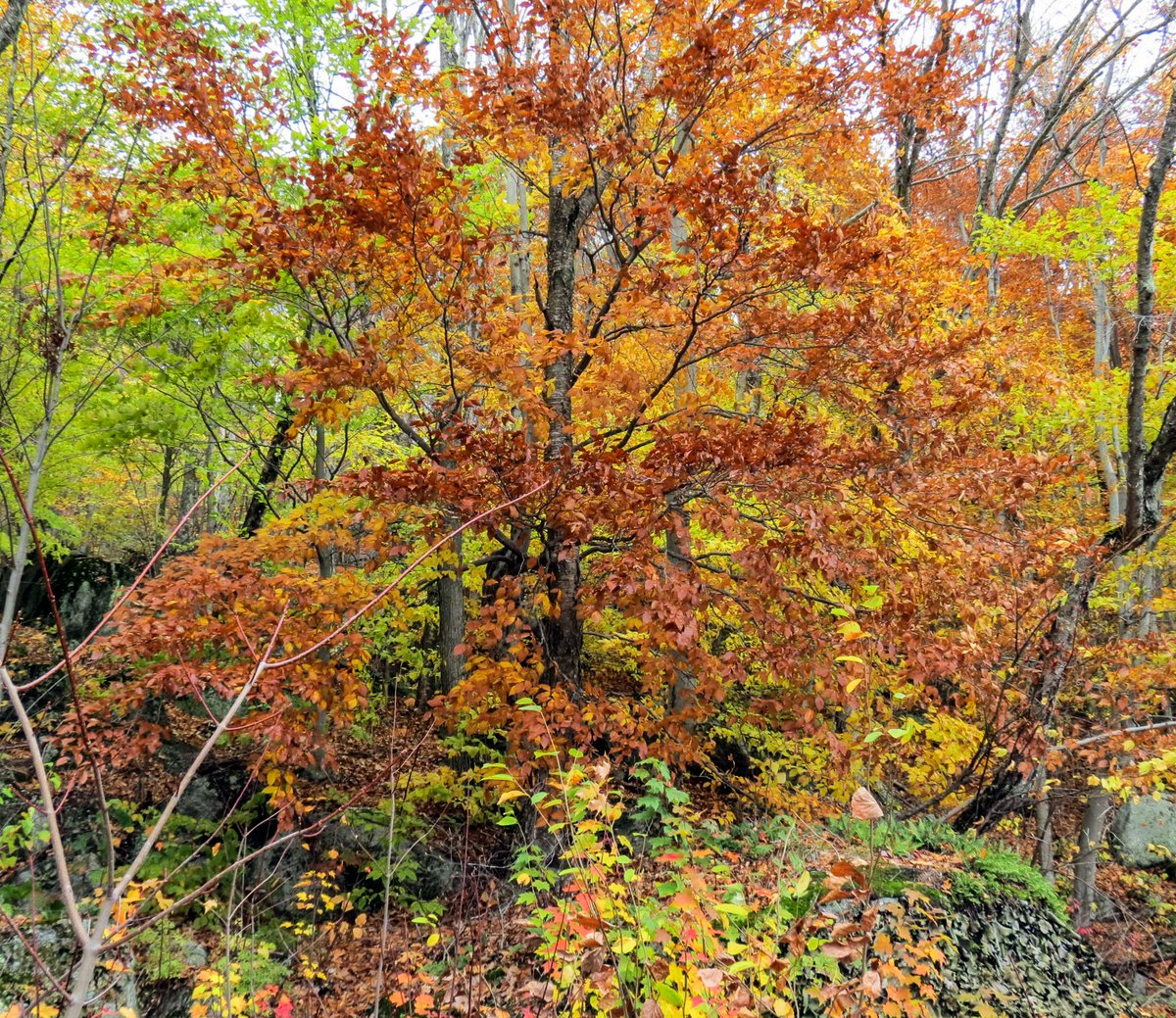 8-foliage