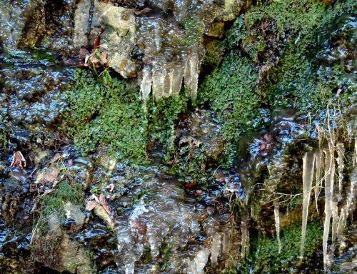 12-liverworts