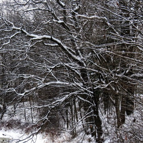 13-snowy-branches