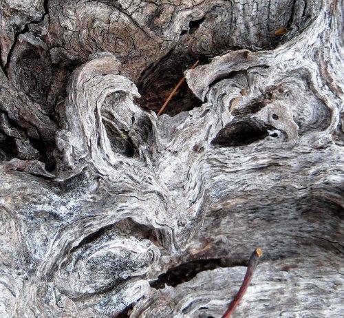 16-old-stump
