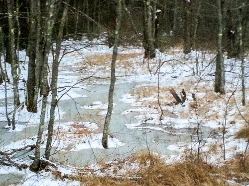 2-icy-woods