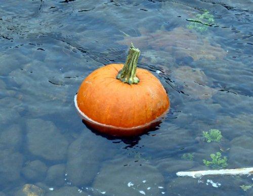 3-pumpkin