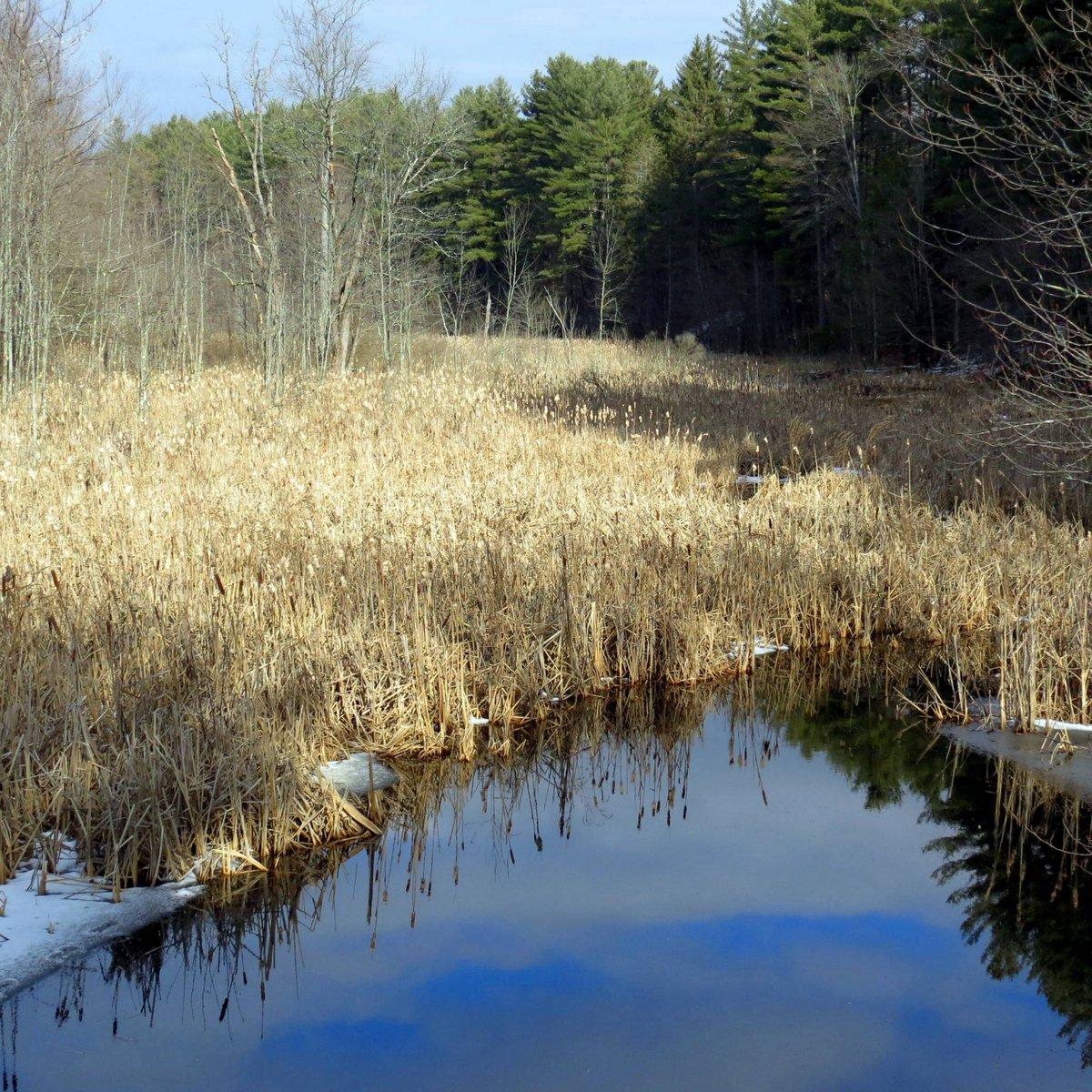 10-wetland