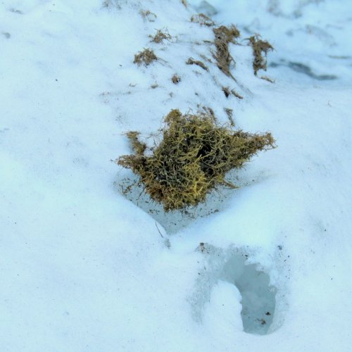 16-moss-on-ice
