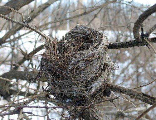 18-nest