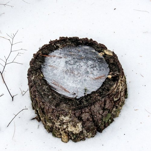 2-stump