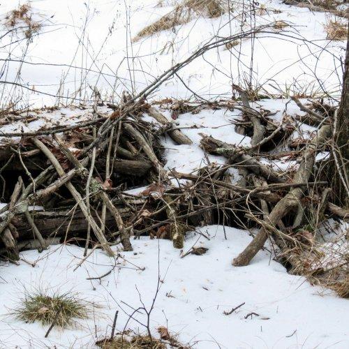 20-beaver-dam