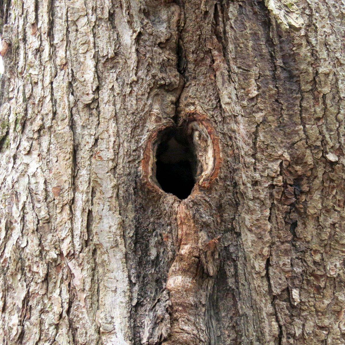 21-woodpecker-hole