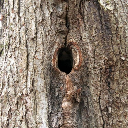 21-woodpecker-hole