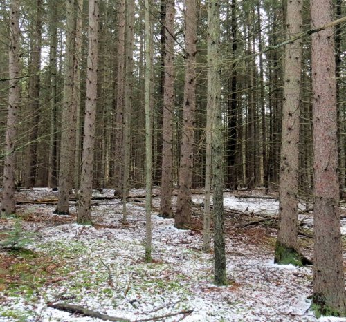 3-plantation-trees