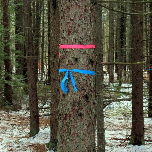 6-marked-tree