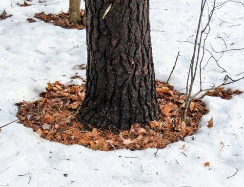 6-snow-melt