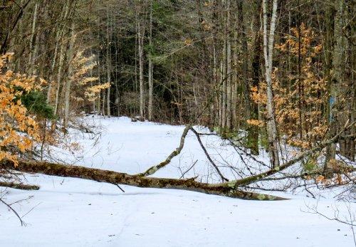 7-fallen-tree