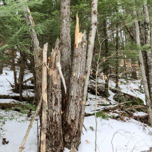 8-broken-tree