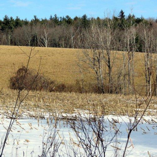 9-pasture