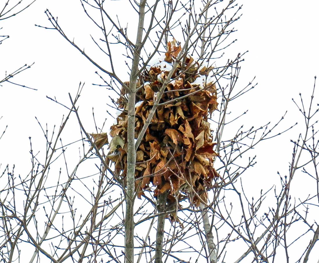 10-squirrel-nest