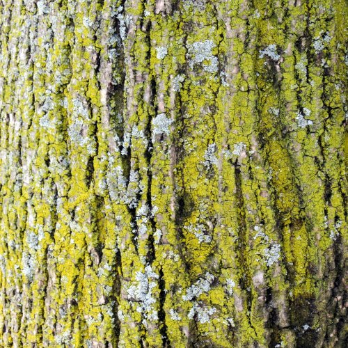 11-lichens-on-tree-trunk