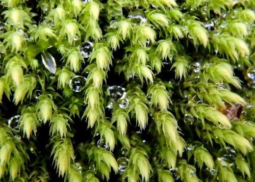 12-wet-moss
