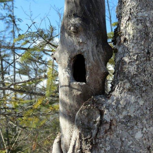 15-hole-in-tree